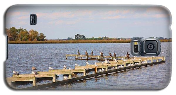 Cormorants And Seagulls On Old Dock Near Blackwater  National Wildlife Refuge Near Cambridge Md Galaxy S5 Case