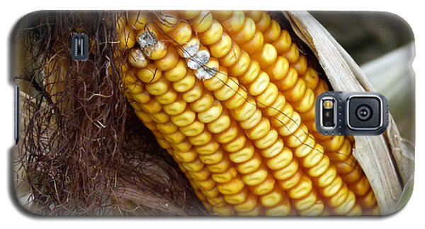 Galaxy S5 Case featuring the photograph Corn Cob Dry by Jeff Lowe