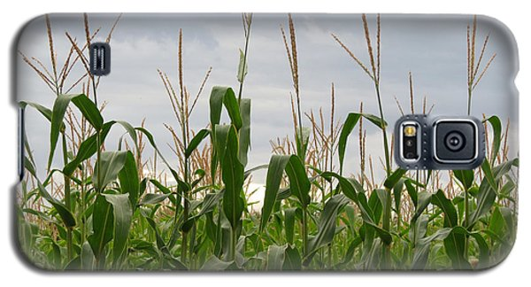 Galaxy S5 Case featuring the photograph Corn Field by Laurel Powell
