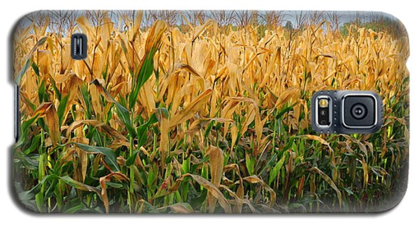 Galaxy S5 Case featuring the photograph Corn Harvest by Terri Gostola