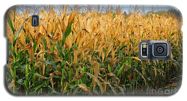 Corn Harvest Galaxy S5 Case