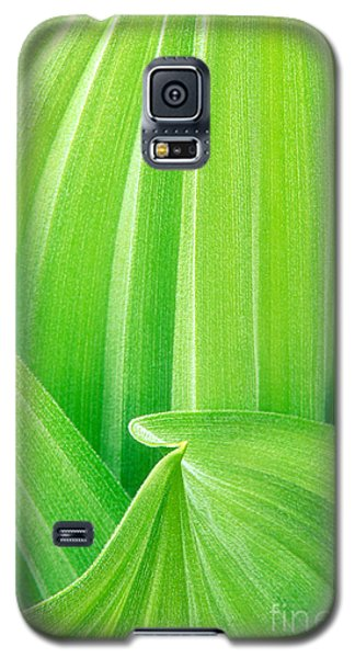 Galaxy S5 Case featuring the photograph Corn Lily Leaf Detail Yosemite Np California by Dave Welling