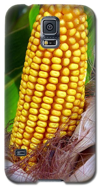Galaxy S5 Case featuring the photograph Corn On The Cob by Jeff Lowe