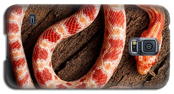 Galaxy S5 Case featuring the photograph Corn Snake P. Guttatus On Tree Bark by David Kenny