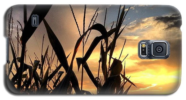 Cornfield Sundown Galaxy S5 Case