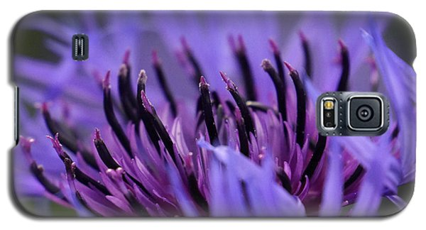 Galaxy S5 Case featuring the photograph Cornflower by Inge Riis McDonald