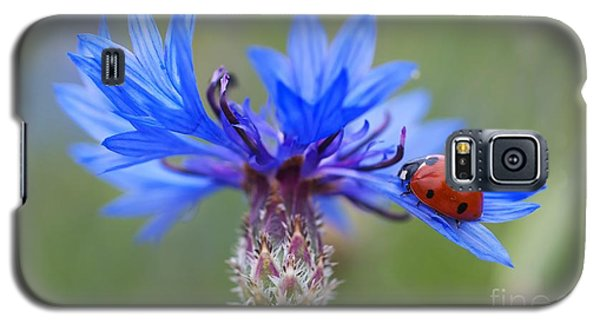 Galaxy S5 Case featuring the photograph Cornflower Ladybug Siebenpunkt Blue Red Flower by Paul Fearn