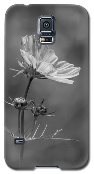 Galaxy S5 Case featuring the photograph Cosmo Flower Reaching For The Sun by Debbie Green