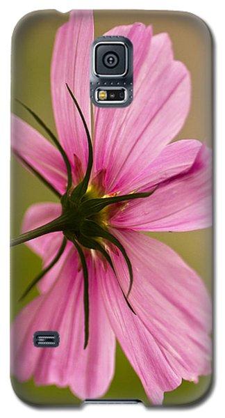 Cosmos In Pink Galaxy S5 Case