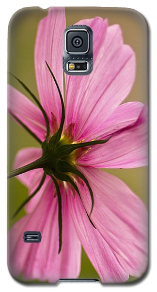 Cosmos In Pink Galaxy S5 Case