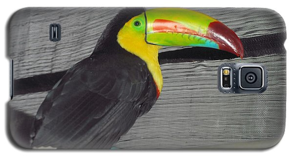 Costa Rican Toucan Galaxy S5 Case