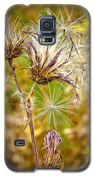 Galaxy S5 Case featuring the photograph Cotten Grass by Jim Thompson