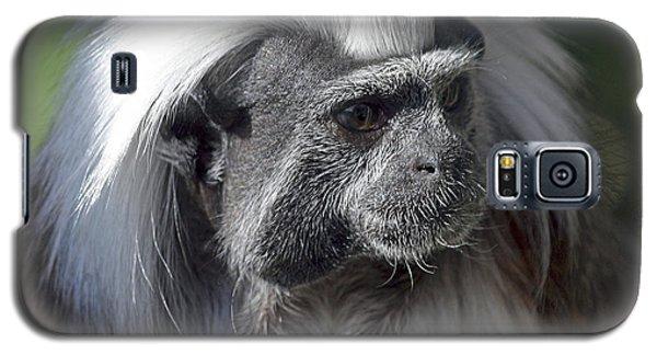Cottontop Tamarin Saguinus Oedipus Galaxy S5 Case