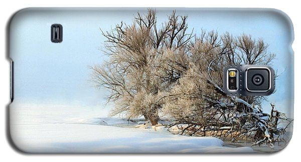 Cottonwoods On Spring Creek Galaxy S5 Case