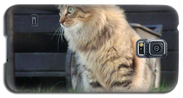 Galaxy S5 Case featuring the photograph Cougar The Barn Cat 2 by Barbie Batson