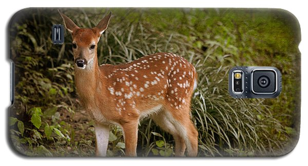 Could It Be Bambi Galaxy S5 Case by Linda Segerson