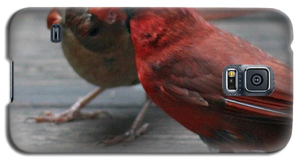 Courting Cardinal Galaxy S5 Case