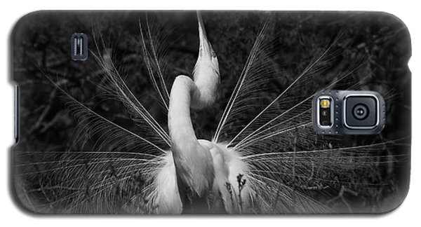 Galaxy S5 Case featuring the photograph Great Egret Courtship Plumes  by John F Tsumas