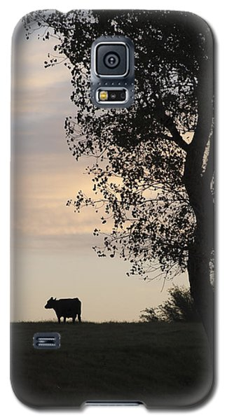 Cow At Last Light Galaxy S5 Case