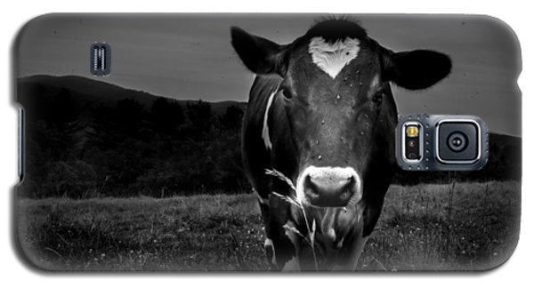 Cow Galaxy S5 Case by Bob Orsillo