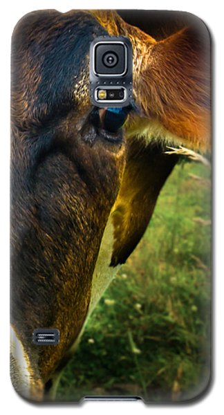 Cow Eating Grass Galaxy S5 Case