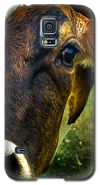 Cow Eating Grass Galaxy S5 Case by Bob Orsillo