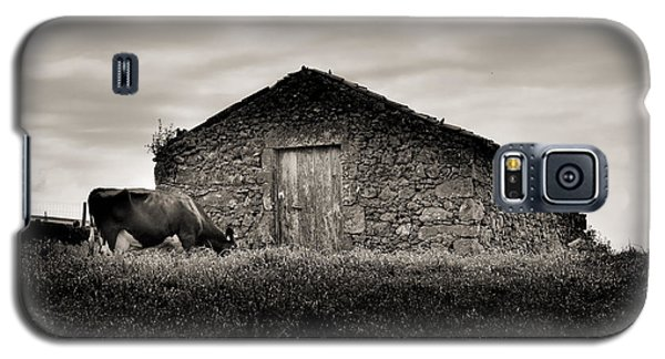 Cow Grazes At Rustic Barn  Galaxy S5 Case
