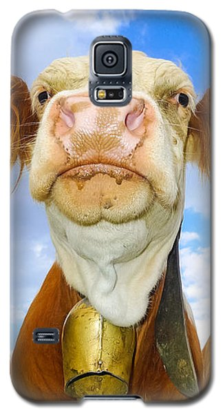 Cow Looking At You - Funny Animal Picture Galaxy S5 Case by Matthias Hauser