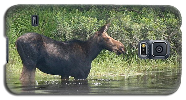 Cow Moose Breakfast Galaxy S5 Case