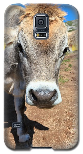 Cow On Alpine Pasture Galaxy S5 Case