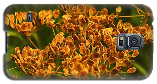 Galaxy S5 Case featuring the photograph Cow Parsnip Seeds by Sandra Foster