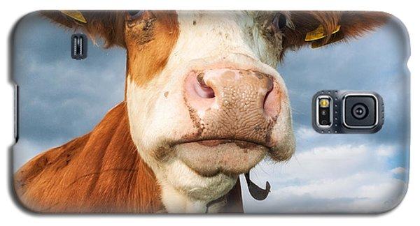 Cow Portrait Galaxy S5 Case