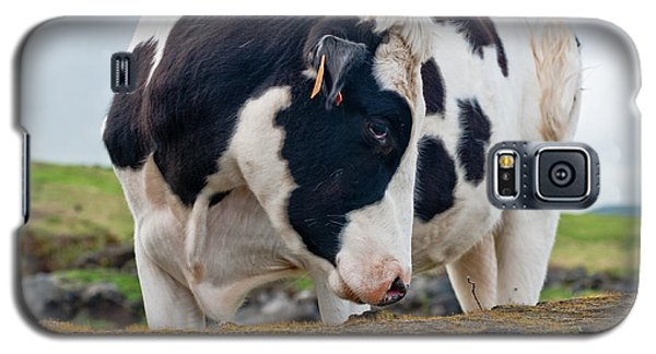 Cow With Head Turned Galaxy S5 Case