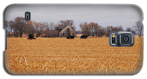 Cows In The Corn Galaxy S5 Case by Mary Carol Story
