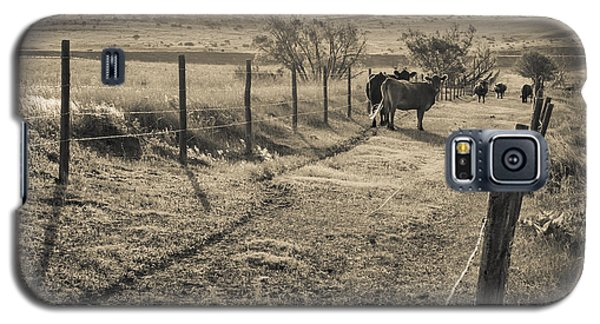 Cows In The Lane Galaxy S5 Case by Dawn Romine