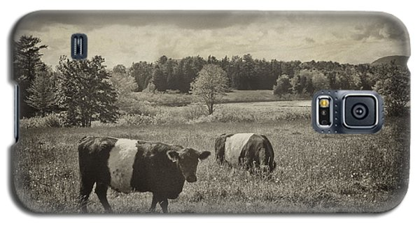 Cows Rockport Maine Galaxy S5 Case