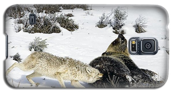 Galaxy S5 Case featuring the photograph Coyote Biting A Grizzly by J L Woody Wooden
