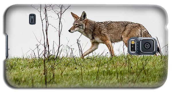 Galaxy S5 Case featuring the photograph Coyote by Brian Williamson