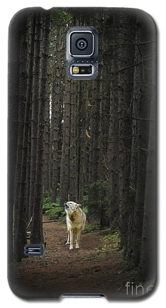 Coyote Howling In Woods Galaxy S5 Case