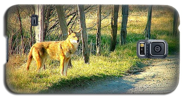 Coyote In Cades Cove Galaxy S5 Case