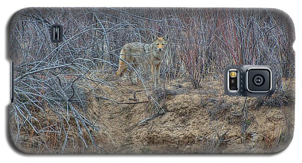 Coyote In The Brush Galaxy S5 Case by Britt Runyon
