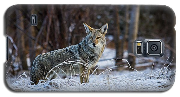 Coyote In The Meadow  Galaxy S5 Case