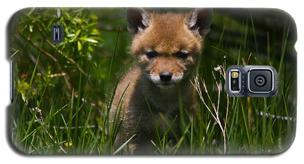 Galaxy S5 Case featuring the photograph Coyote Pup by Mitch Shindelbower