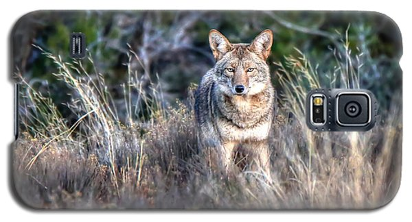 Coyote Stare Down Galaxy S5 Case