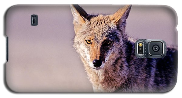 Coyote Stares Galaxy S5 Case