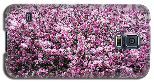 Crab Apple Tree Galaxy S5 Case by Aimee L Maher Photography and Art Visit ALMGallerydotcom