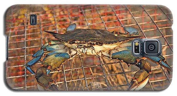 Crab Got Away Galaxy S5 Case