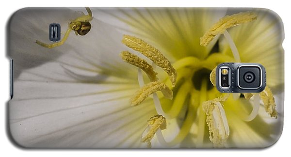 Crab Spider And Dune Evening Primrose Galaxy S5 Case
