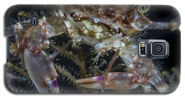 Crab Staring At You Galaxy S5 Case