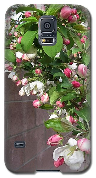 Crabapple Blossoms And Wall Galaxy S5 Case